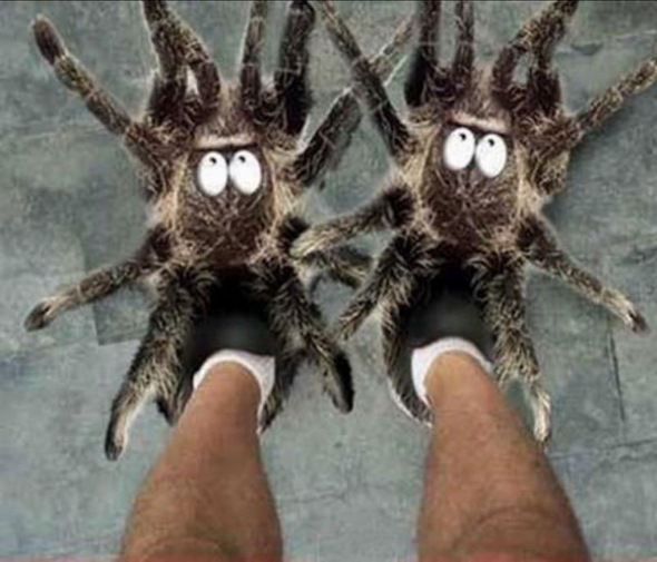 IMAGE(http://flossiefrufru.files.wordpress.com/2011/09/spider-shoes.jpg?w=590)